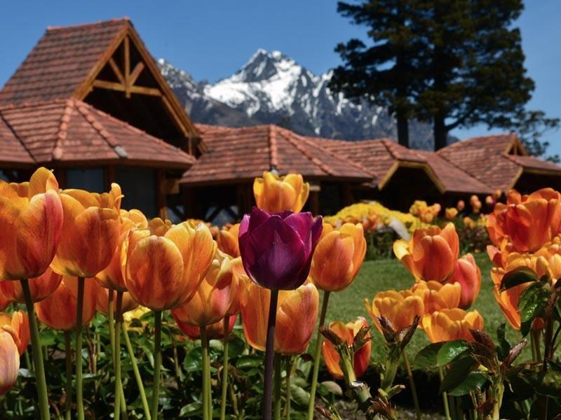Tulips in Bariloche, Patagonia, Argentina