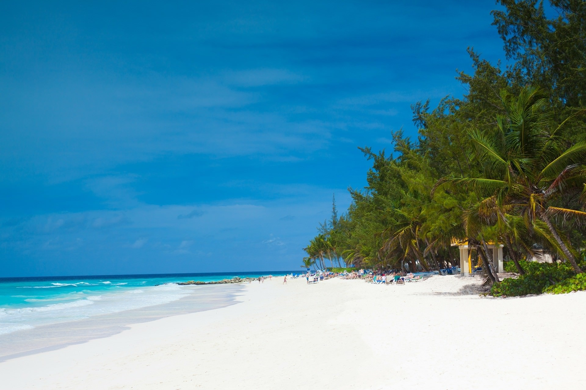 Exotic Beach in Barbados