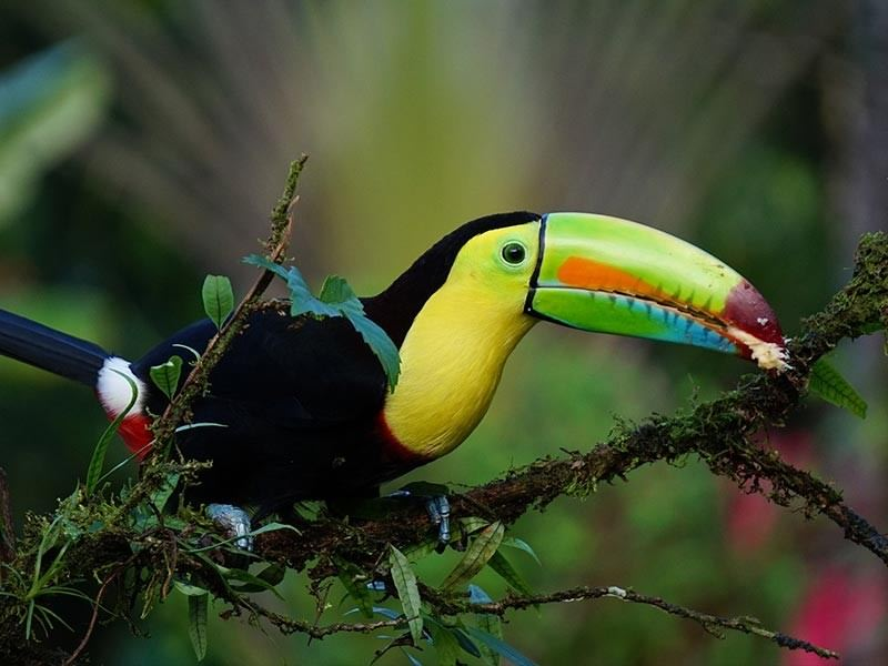Bird rain forest
