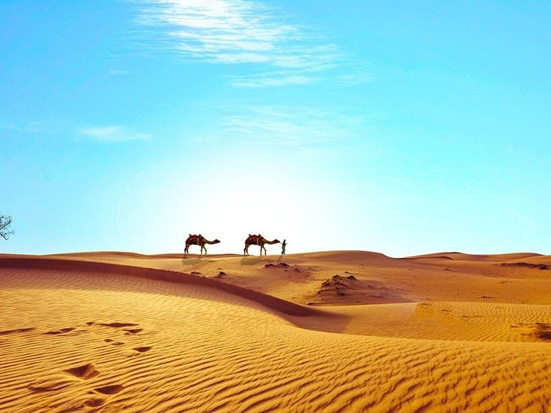 Camels in the Sahara Desert, Egypt