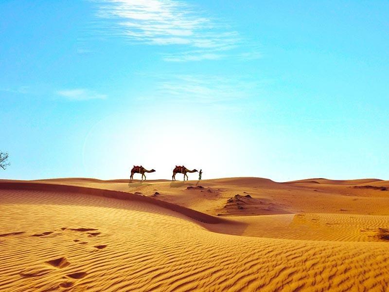 Camels in the Sahara Desert, Egypt