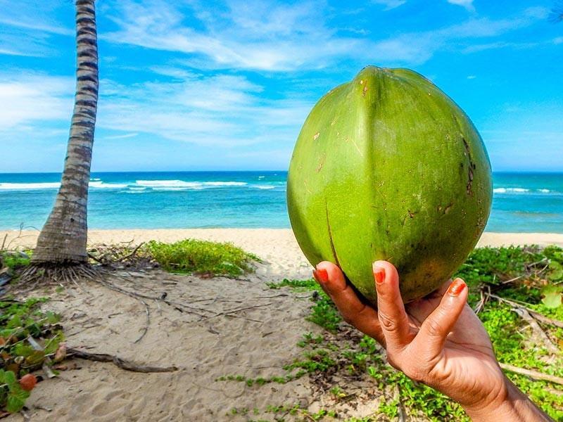 Fresh Coconut on Seychelles Beach