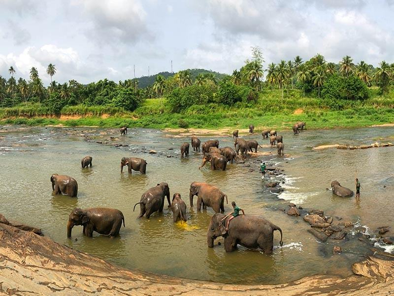 Elephants in the river in Rambukkana, Sri Lanka
